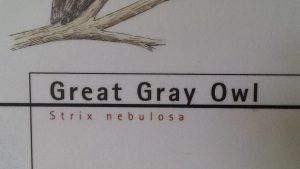Great Grey Owl Sign