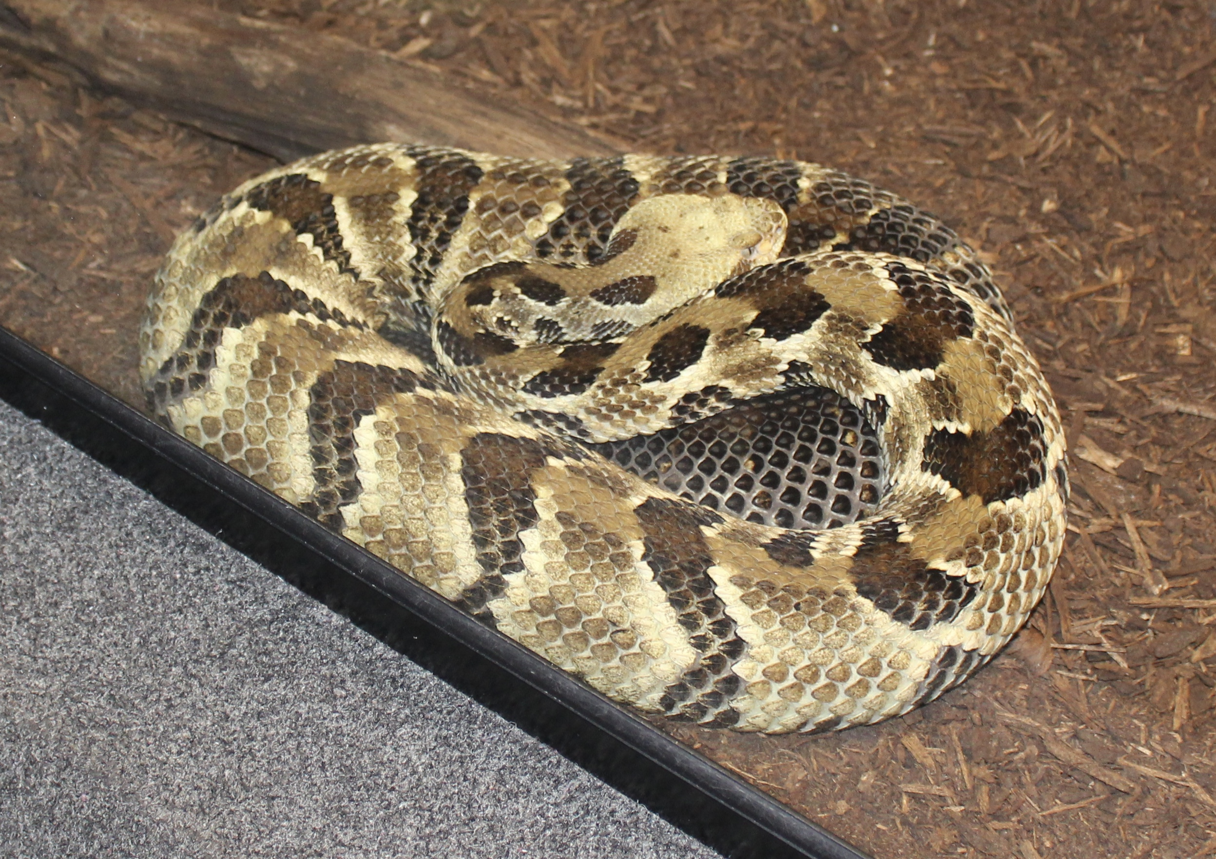 Curled Up Snake