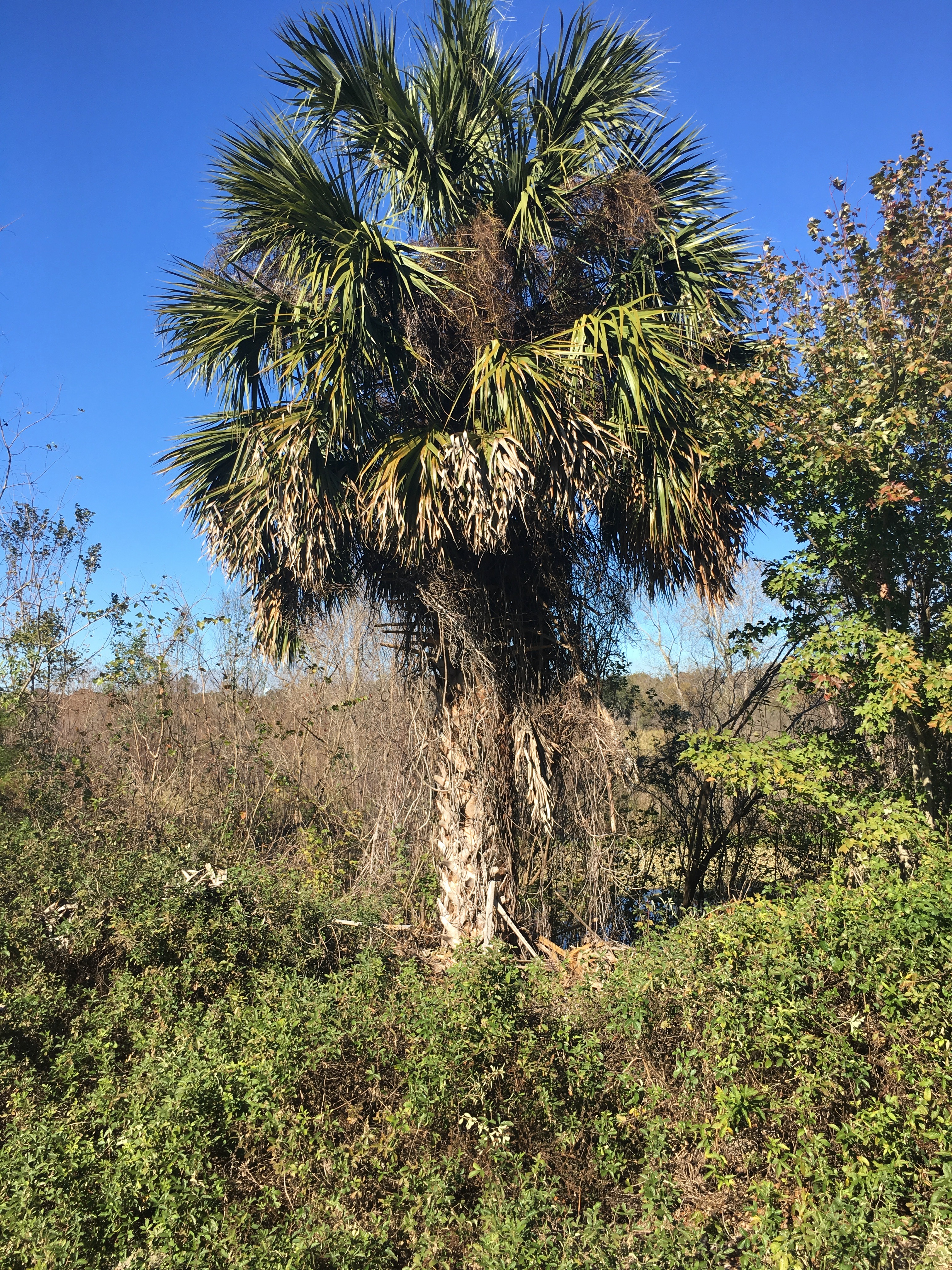 Palm Tree On Old Canal Trail