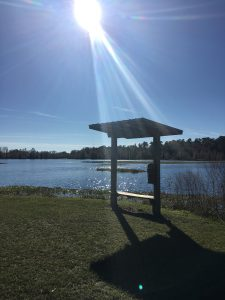 Bench With Sun Pic 2